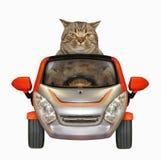 O gato conduz um carro pequeno foto de stock