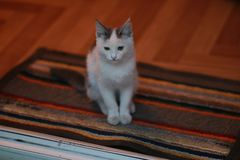 O gato curioso engraçado gosta de um chefe 4 fotografia de stock