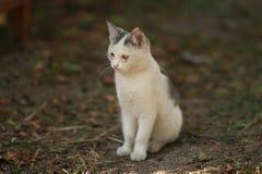 O gato curioso engraçado gosta de um chefe 2 fotos de stock