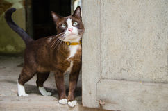 O gato da dúvida Fotos de Stock Royalty Free