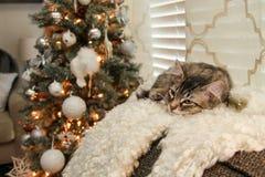 O gato da vaquinha está dormindo na frente da árvore de Natal fotografia de stock royalty free