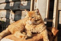 O gato de cabelos compridos irritado vermelho encontra-se, sentando-se na cadeira perto da casa Imagens de Stock Royalty Free