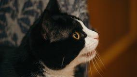 O gato de casa diz fotografia de stock