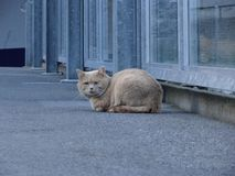 O gato de levantamento fotografia de stock royalty free
