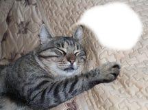 O gato de gato malhado adulto dorme na cama fotografia de stock royalty free
