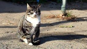 O gato de gato malhado bonito com um colar branco trava os sons da rua vídeos de arquivo