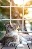 O gato de gato malhado preto e branco do close-up que olha acima no jardim com fundo da luz suave tem a rede atrás Gato na frente Foto de Stock