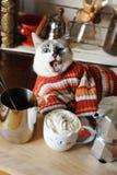 O gato de olhos azuis branco vestiu-se em lambedura listrada da camiseta cercada por acessórios do café Café com chantiliy Imagens de Stock
