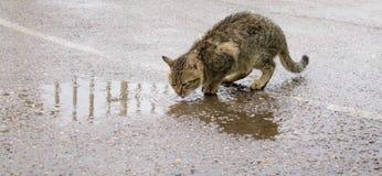 O gato desabrigado é água potável fotografia de stock