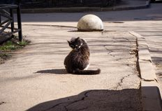 O gato desabrigado está lavando-se na rua imagens de stock