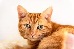 O gato desabrigado precisa uma casa do forever imagens de stock
