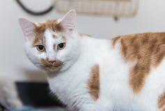 O gato desabrigado precisa uma casa do forever foto de stock