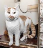 O gato desabrigado precisa uma casa do forever imagens de stock royalty free