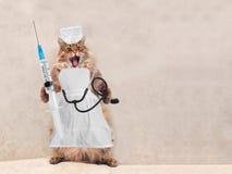 O gato desgrenhado grande é posição muito engraçada Conceito da medicina 9 fotografia de stock