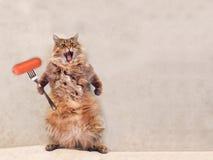 O gato desgrenhado grande é posição muito engraçada, salsicha 3 Fotografia de Stock Royalty Free