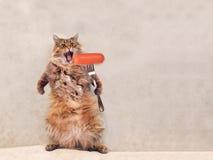 O gato desgrenhado grande é posição muito engraçada, salsicha 2 Imagem de Stock