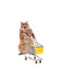 O gato desgrenhado grande com o carrinho de compras isolado no branco número Fotografia de Stock Royalty Free