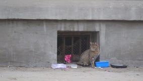 O gato disperso desabrigado senta-se em uma parede video estoque