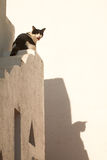 O gato diz o miaow Fotografia de Stock