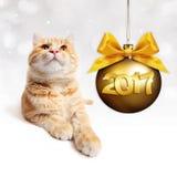 O gato do gengibre e a bola dourada do Natal com a fita do cetim do ouro curvam-se Imagens de Stock