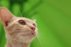 O gato do gengibre que relaxa na grama olha acima imagens de stock royalty free