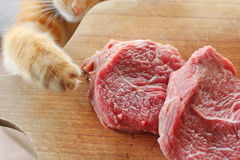 O gato do gengibre rouba a carne crua Foto de Stock Royalty Free