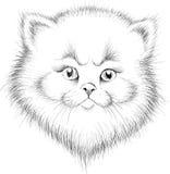 O gato do logotipo do vetor para o t-shirt imagens de stock royalty free