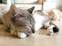 O gato do sono descansa no assoalho com seus amigos feliz fotos de stock