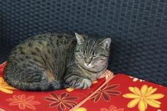 O gato doce está encontrando-se em um coxim e em um sonho Foto de Stock Royalty Free