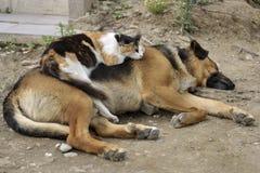 O gato dorme em um cão fora Fotos de Stock Royalty Free