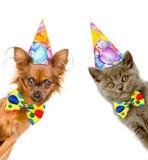O gato e o cão em chapéus do aniversário com laço olham para fora atrás de uma bandeira Isolado no fundo branco Fotos de Stock
