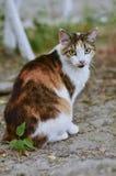 O gato e a natureza do verão Fotos de Stock Royalty Free
