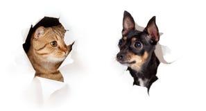 O gato e o cão o lado de papel no furo rasgado isolaram-se Fotos de Stock