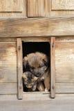 O gato e o cão são amigos imagem de stock royalty free