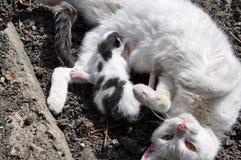 O gato e o gato do bebê Fotos de Stock Royalty Free