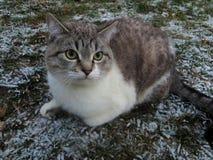 O gato e a primeira neve Fotografia de Stock Royalty Free