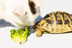 O gato e a tartaruga obtêm amigos Imagem de Stock