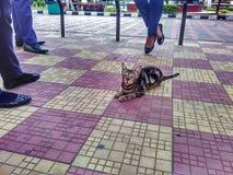 O gato em público foto de stock