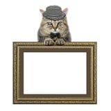 O gato em um chapéu e em um laço de borboleta confia na moldura para retrato Imagens de Stock