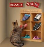 O gato em uma loja imagens de stock
