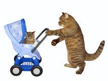 O gato empurra o carrinho de criança azul com gatinho 2 fotografia de stock