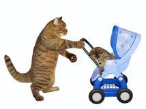 O gato empurra o carrinho de criança azul com gatinho fotos de stock