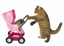 O gato empurra o carrinho de criança com gatinho 2 foto de stock royalty free