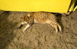 O gato encontra-se na terra Imagens de Stock