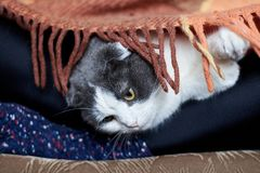 O gato encontra-se nos pés da menina nas peúgas sob o tapete fotos de stock royalty free