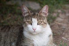 O gato encontra-se para baixo Imagens de Stock Royalty Free