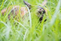 O gato encontra-se para baixo na grama no jardim fotografia de stock
