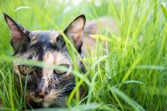 O gato encontra-se para baixo na grama no jardim fotografia de stock royalty free