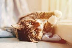O gato encontra-se perto da janela imagens de stock royalty free