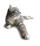 O gato encontra-se (a vista dianteira) Imagem de Stock